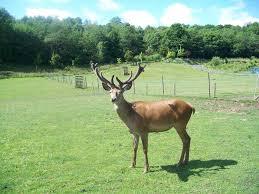 Wild Boar Park & Eco Lodge